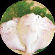 連子鯛の干物